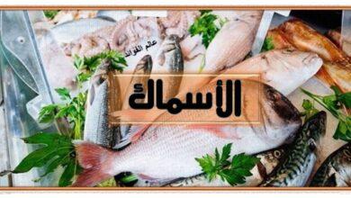 فوائد الاسماك