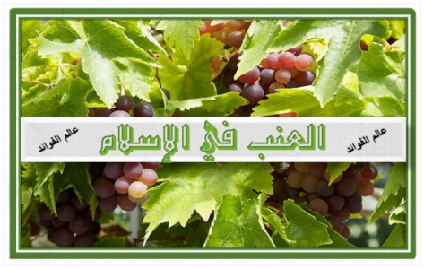 معلومات هامة عن العنب في الاسلام