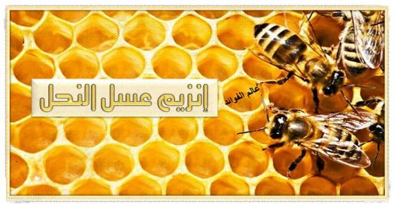 انزيمات عسل النحل